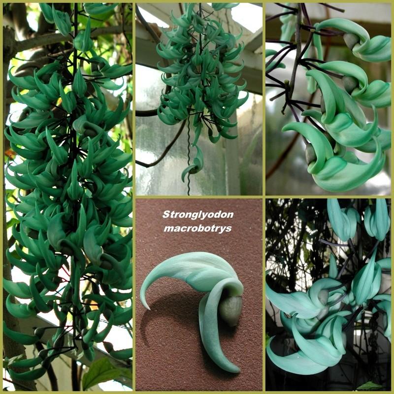 Die Jade-Liane Collag18