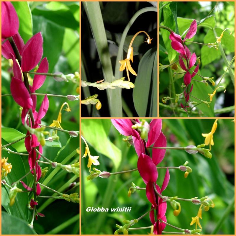 Die Blüte mit dem Angelhaken ohne Fisch Collag19