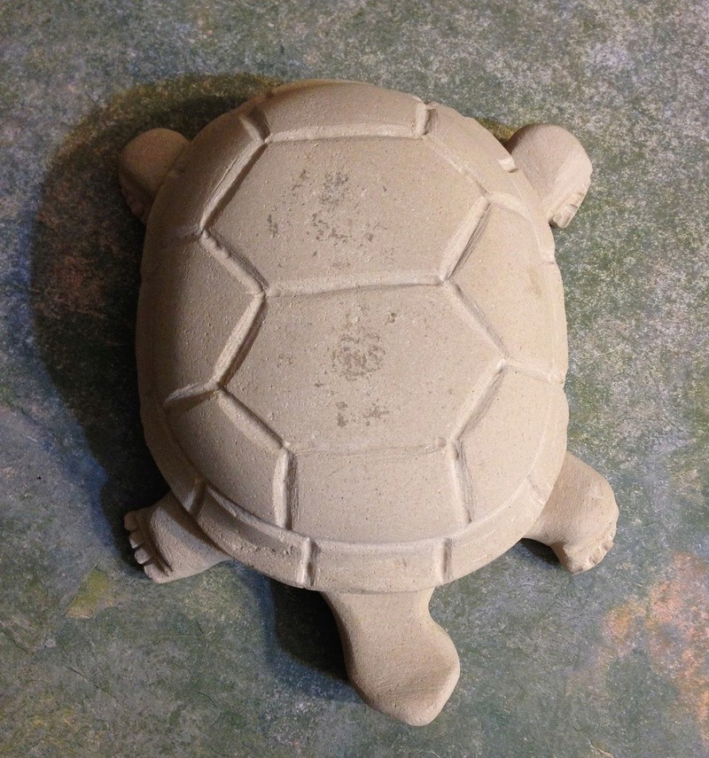 Tortue Img_9427
