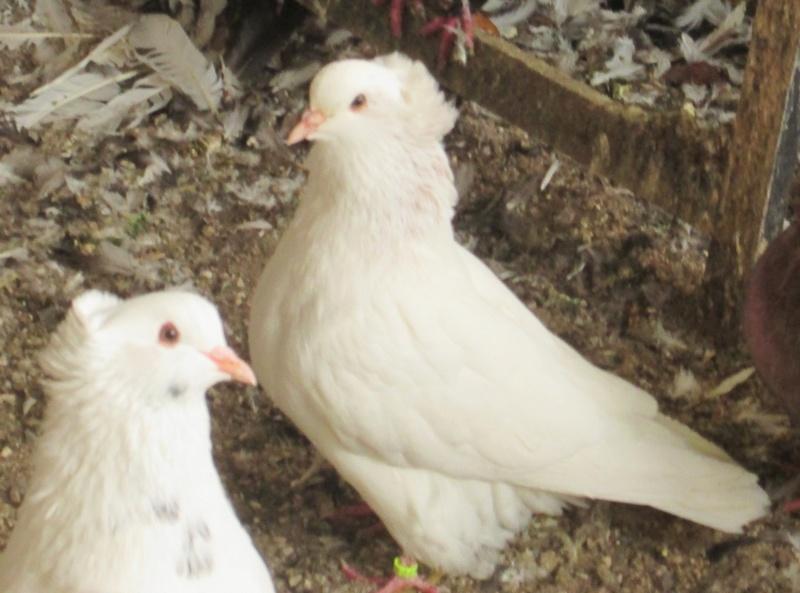 élevage à LEPORCQ Rémi  Img_2937