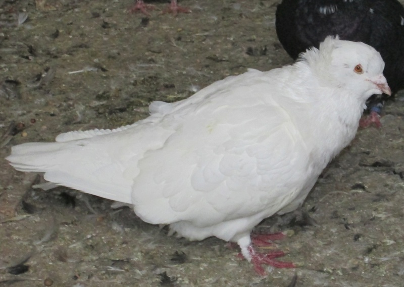 élevage à LEPORCQ Rémi  Img_3026