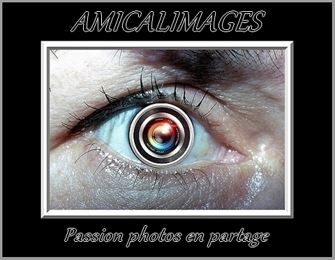 Amicalimages