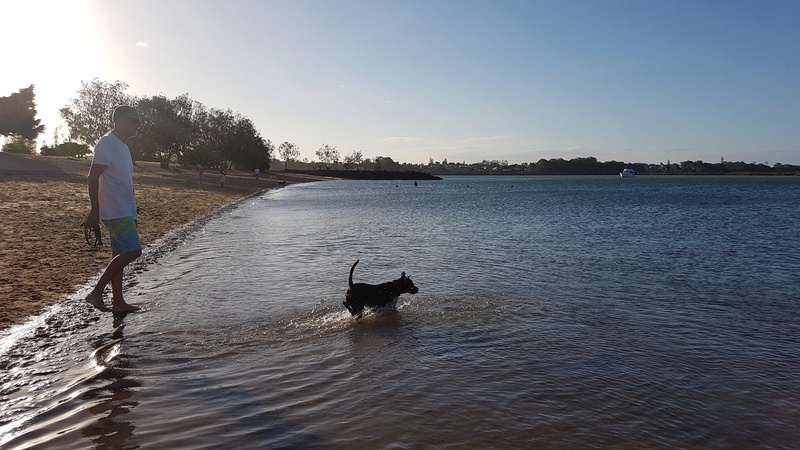 Rosie at the dog beach down the road 56f5c310
