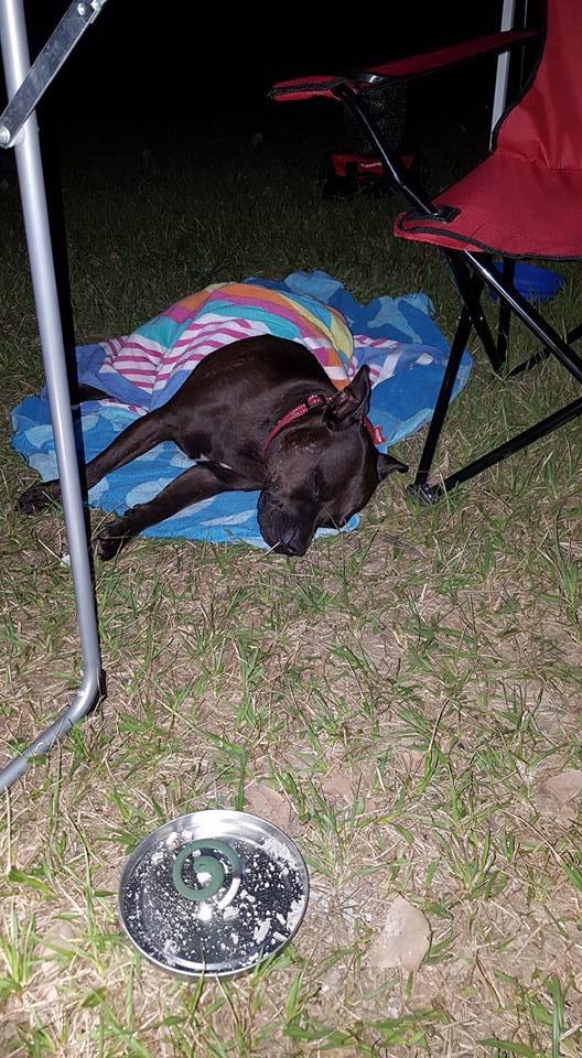 Camping Rosie 5ac13b10