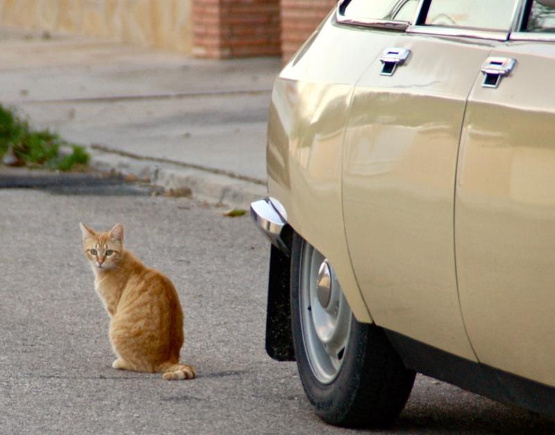 Ce chat me cherche... - Page 4 Dsc_0810