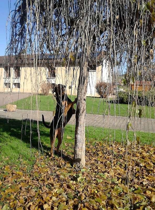 """dur dur d""""etre un chien  - Page 4 Dsc_1612"""