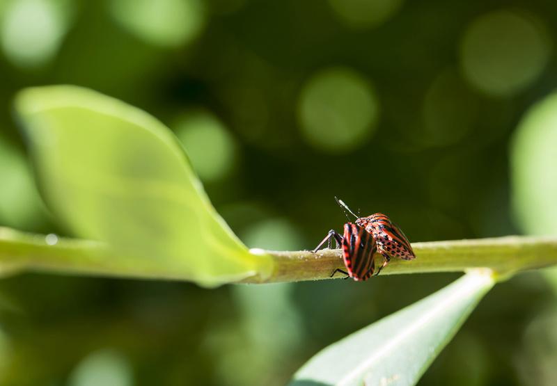Insectes et Proxi. [Fil Ouvert] - Page 12 Gendar11
