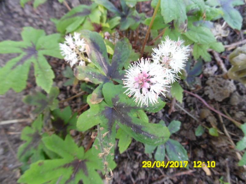 plante a identifier 1226 Sam_1431