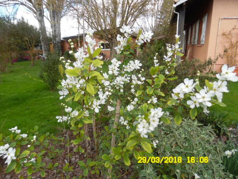 plante a identifier 1130 Sam_1436