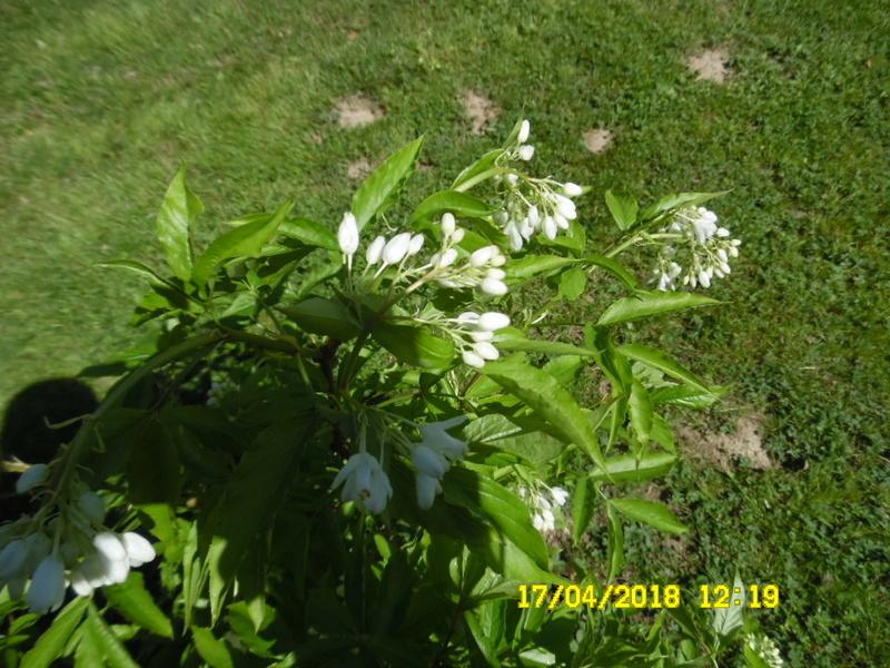 Re: identification d une plante Sam_1865