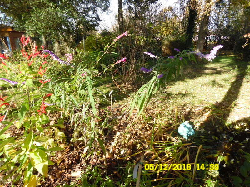 batouran      mes photos - Page 14 Sam_2116
