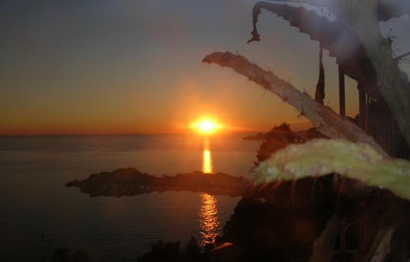 Il sole di natale Dscn3010