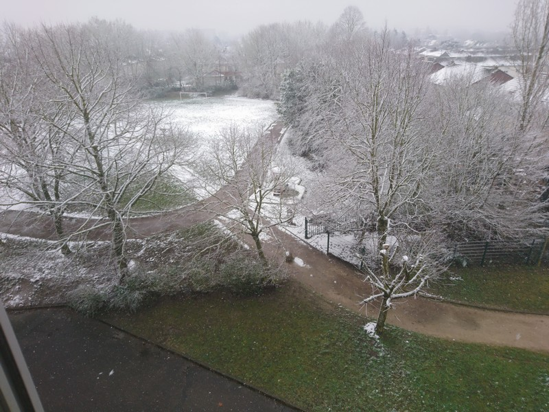 Coucou de février Neige10