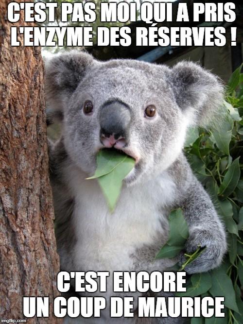 Les memes de la Cité - Page 2 26wnid10