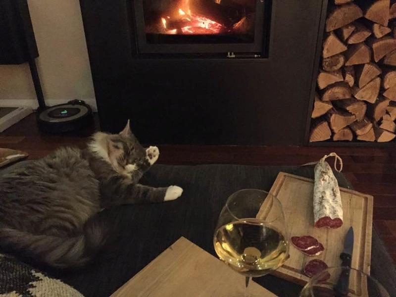 jupiter - JUPITER, chat mâle  gris Tabby blanc poils mi longs, né le 04/10/2014   23032613