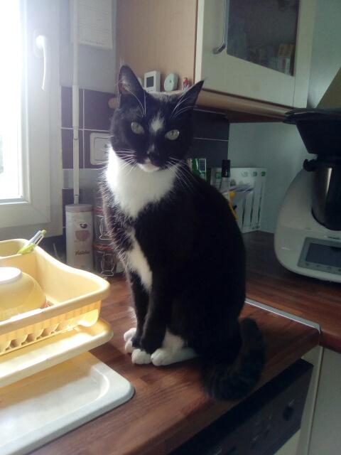 SCOUBI chat européen noir et blanc né en juin 2012  Cid_im60