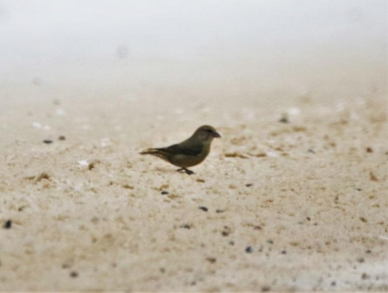 Quel est cet oiseau ? Img_9310