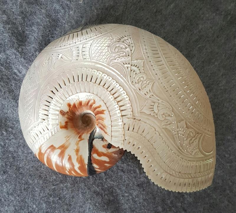 Nautilus macromphalus - G.B. Sowerby II, 1849 - Une espèce protégée en  Nouvelle-Calédonie Img_2012