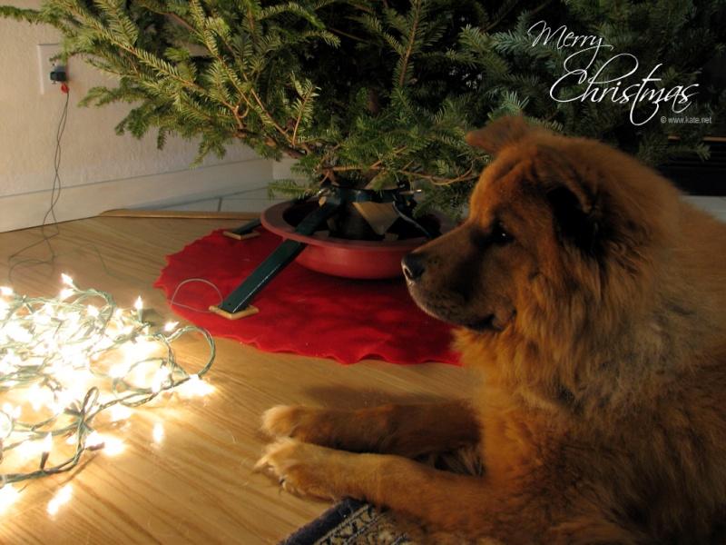 Merry Chistmas Xmas_c10