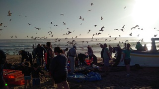 14 – Mercredi 27 septembre 2017 - Costa da Caparica – Plage, brouillard, surf Img_2036