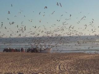 14 – Mercredi 27 septembre 2017 - Costa da Caparica – Plage, brouillard, surf Img_2038