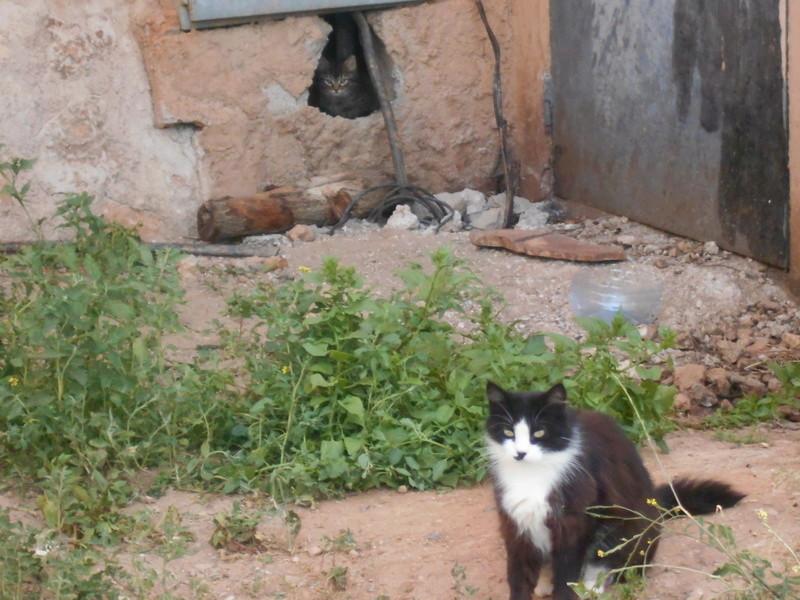 Les petits chatons  Dscn1710