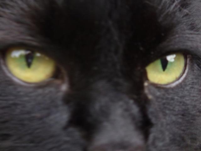 The Cats Thread  Sam_2313