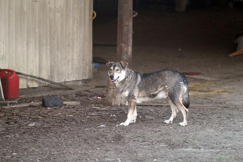 NEYHO , né en 2007 - ( En pension à Bucarest ) - A la ferme de WOF Img_4114