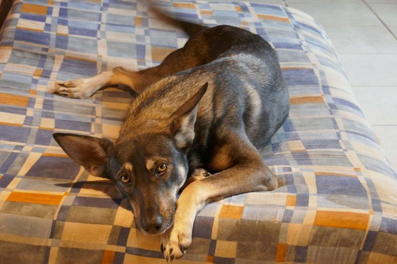 SHADY, née en 2015 - (Alina) - Adoptés via le refuge de Jouvence Shady10