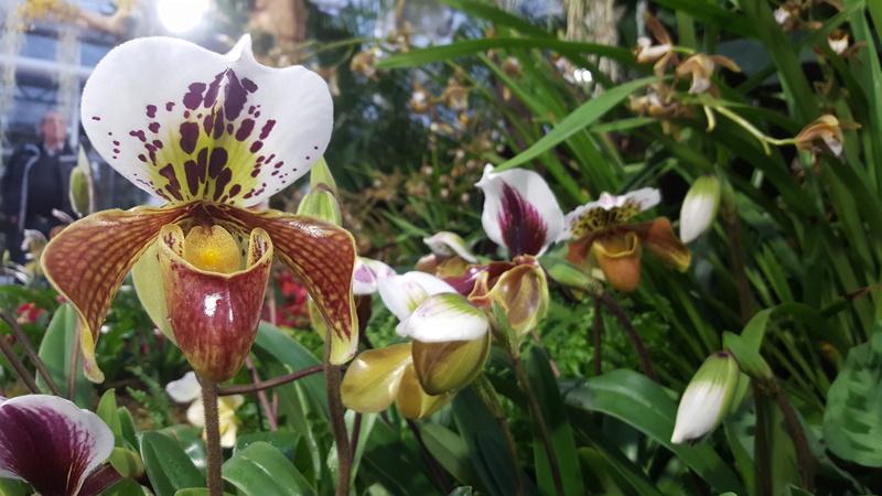 Orchideenausstellung in Bern 20180113