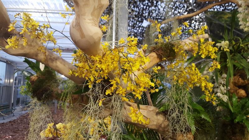 Orchideenausstellung in Bern 20180114