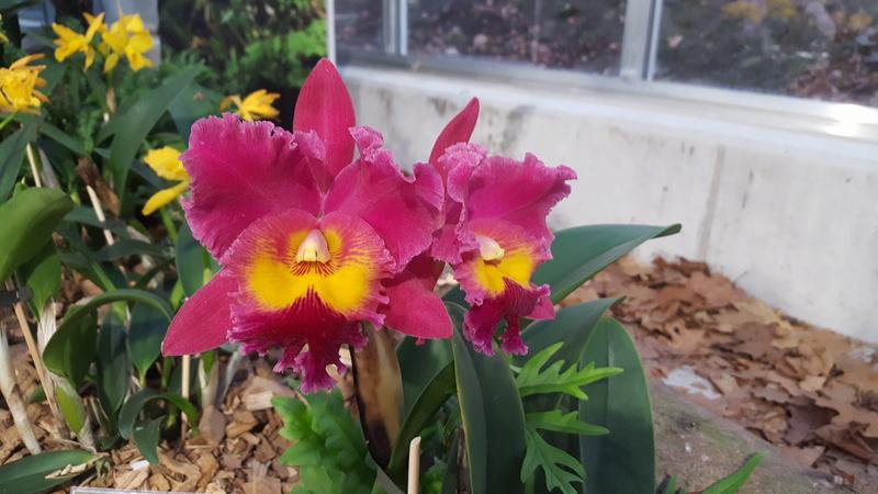 Orchideenausstellung in Bern 20180115
