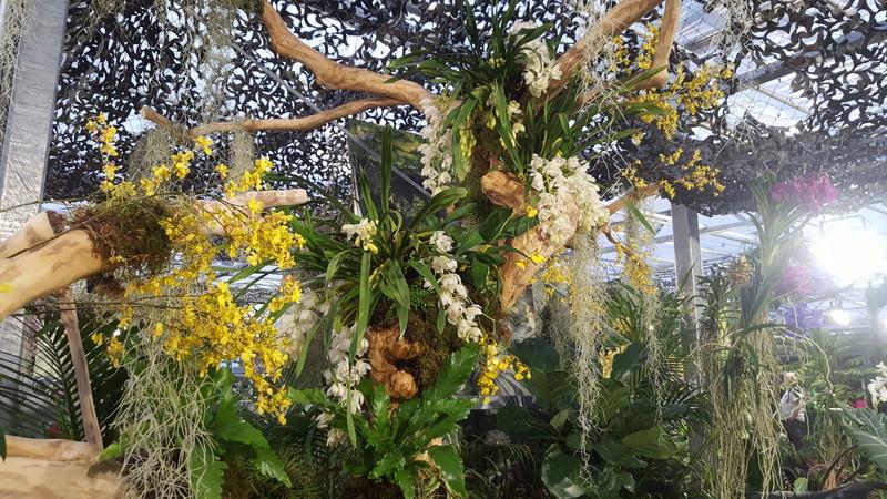 Orchideenausstellung in Bern 20180116