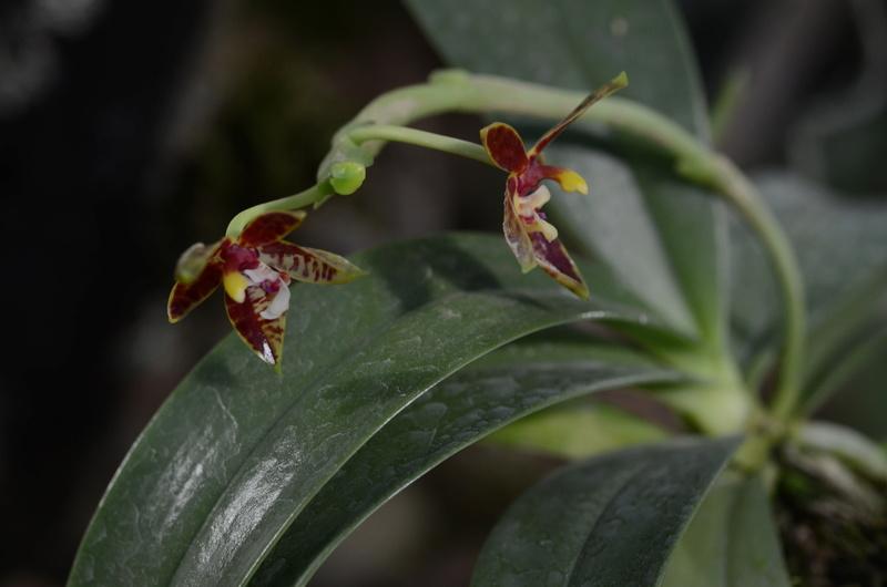 Orchideenausstellung in Bern Dsc_9810