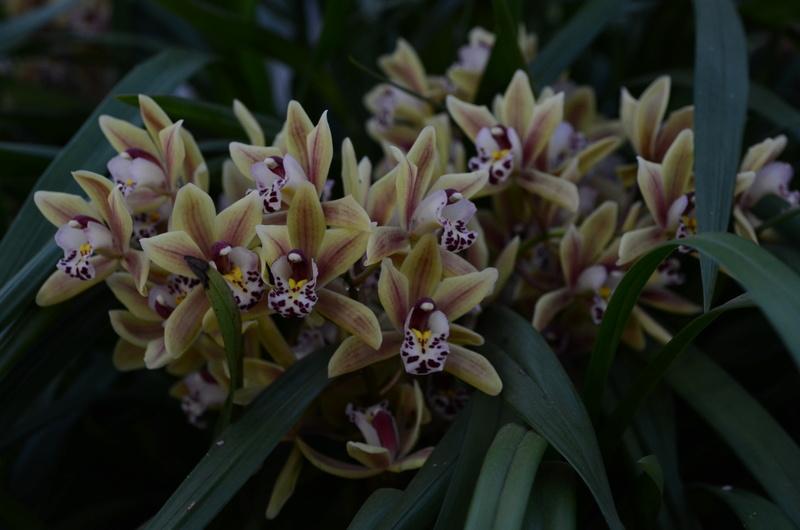 Orchideenausstellung in Bern Dsc_9811