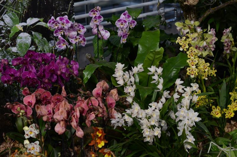 Orchideenausstellung in Bern Dsc_9914
