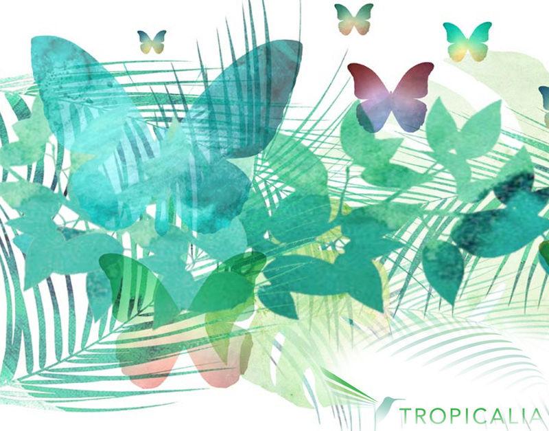 Projet Tropicalia Image_10