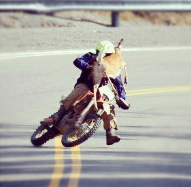 Humour en image du Forum Passion-Harley  ... - Page 38 Capt2013
