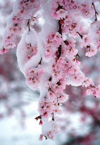 Pour semer des fleurs dans le coeur ... - Page 2 50f5d910