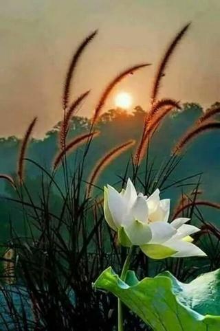 Pour semer des fleurs dans le coeur ... - Page 3 Ebb46310