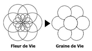 La géométrie sacrée Graine10