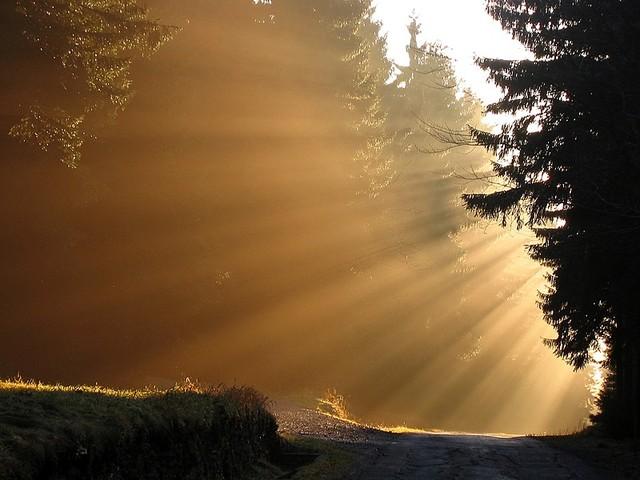 La forêt magique des fées Sunset11