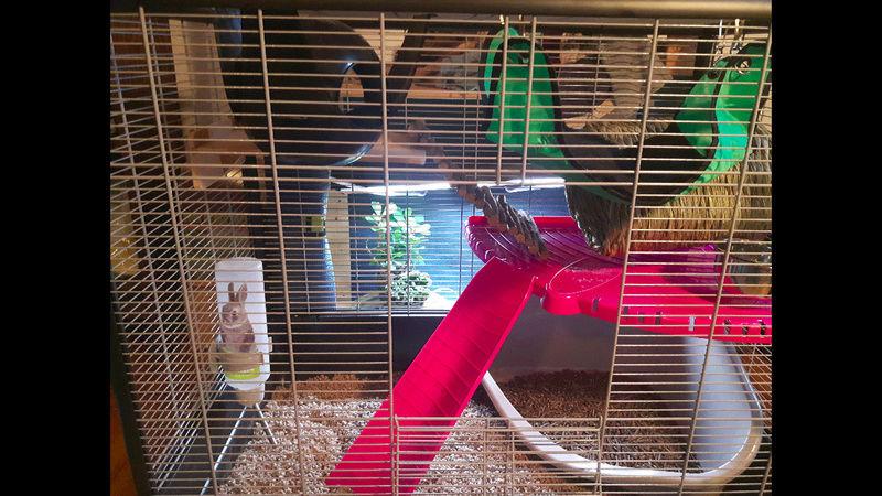 Mon premier set up de cage Screen10