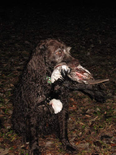 Impromptu Duck Hunt Nyssa_10
