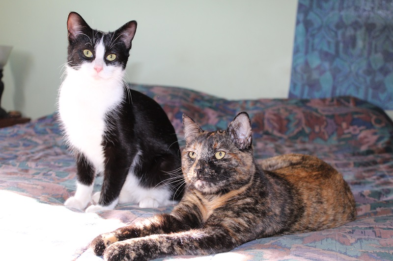 Meet Velvet My New Kitty Velvet10