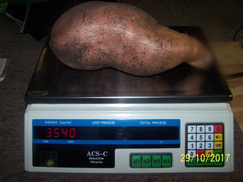 Sweet Potatoes - Page 5 100_3714