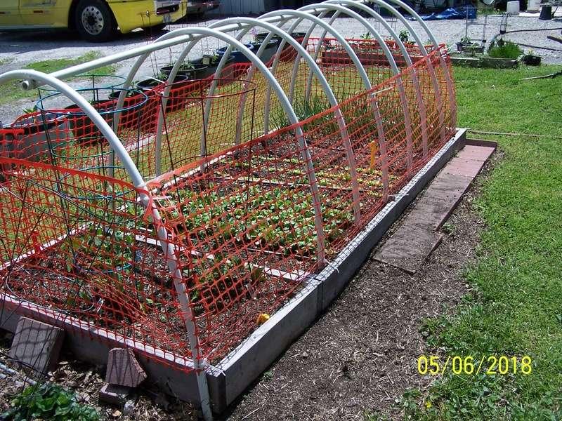 Mr. Booker's Garden -2018 Salad_10