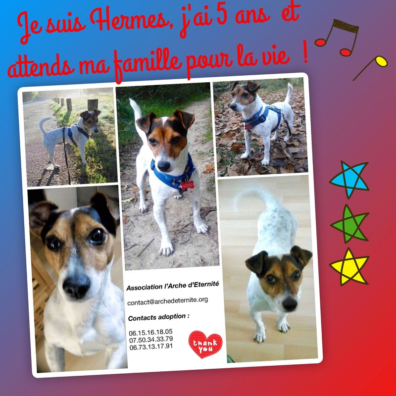 Week-end Adoption du 27 et 28 Janvier Hermys10