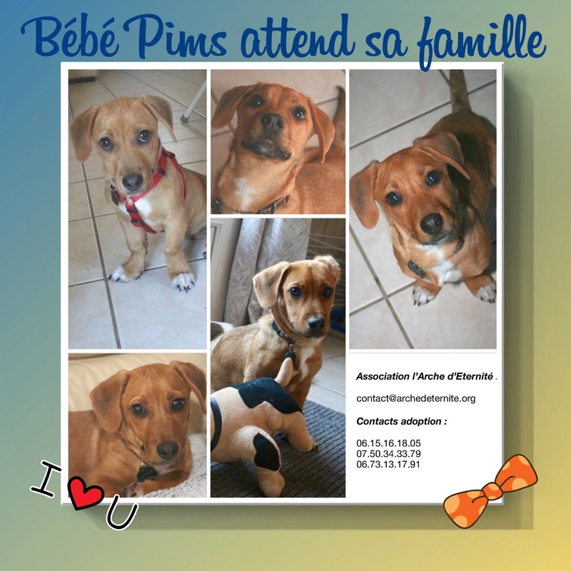 Week-end Adoption du 27 et 28 Janvier Pims10