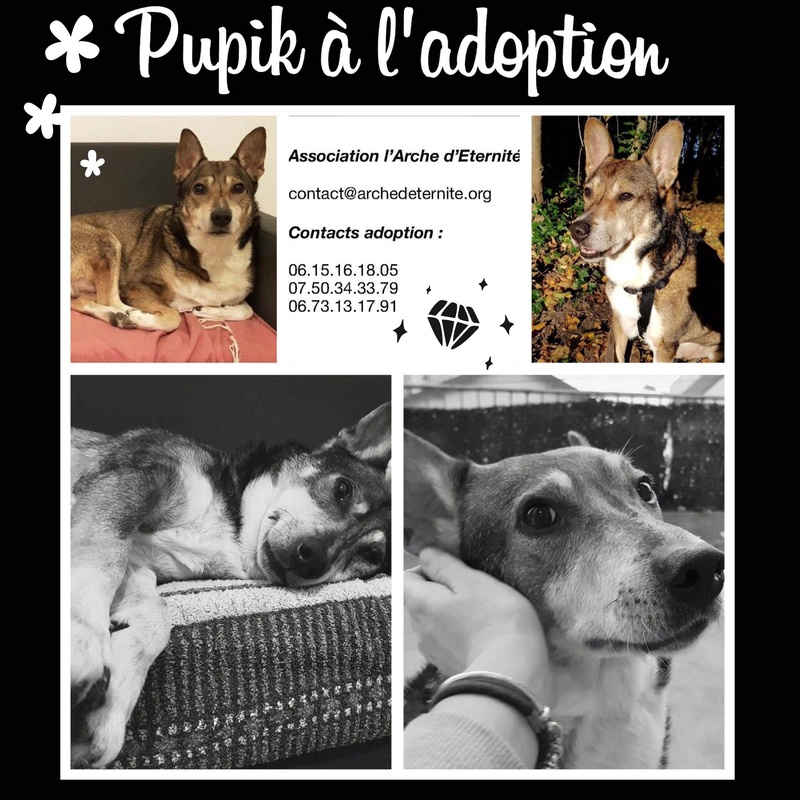 Week-end Adoption du 27 et 28 Janvier Pupik11